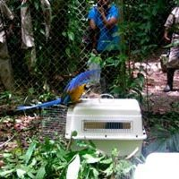 b&g-macaws-breeding4