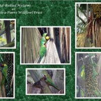 b&g-macaws-breeding5